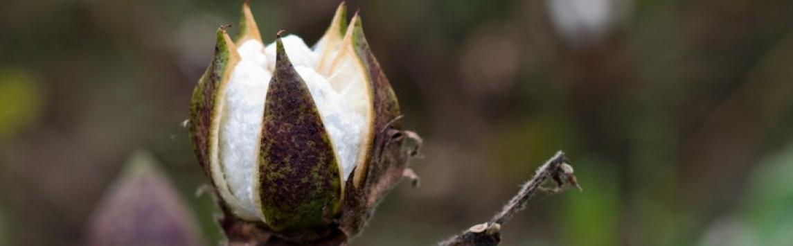 Fairtrade přichází s novým textilním standardem