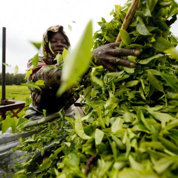 Mýty o Fairtrade